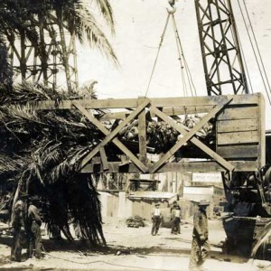 Transplanting at the Panama Pacific International Exposition, San Francisco, 1915